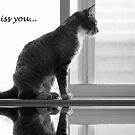 Miss you by Kimberly Palmer