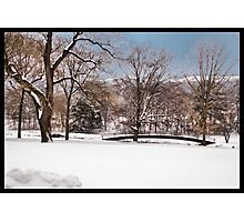 Winter At Weyhill Photographic Print