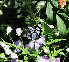 Blue Butterfly by Judy Gayle Waller