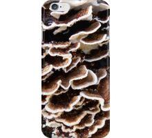 Bracket Fungi  iPhone Case/Skin