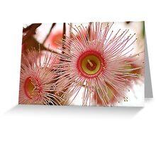 Pink Flowering Eucalypt 1 Greeting Card
