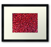 Cranberry Harvest - Fall Autumn Season - Plentiful Red Berries Framed Print