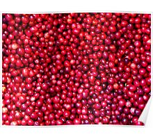 Cranberry Harvest - Fall Autumn Season - Plentiful Red Berries Poster