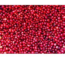 Cranberry Harvest - Fall Autumn Season - Plentiful Red Berries Photographic Print