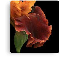 Bronze Iris Canvas Print
