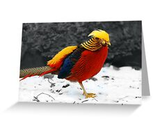 Bright On White Greeting Card