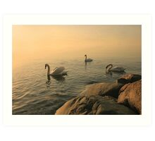 A Trio Of Swans At Sunrise Art Print