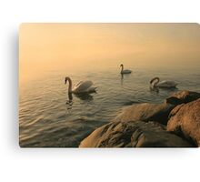 A Trio Of Swans At Sunrise Canvas Print