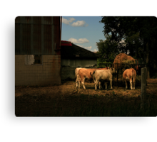 Afternoon Feed Canvas Print