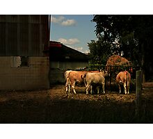 Afternoon Feed Photographic Print
