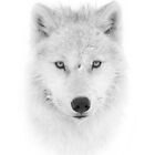 Arctic Wolf Portrait by Jim Cumming