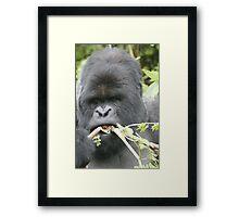 Gorilla Snack Framed Print