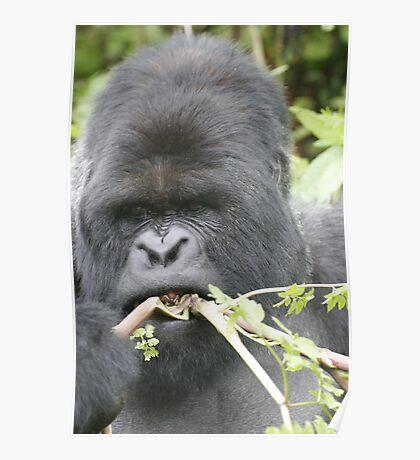 Gorilla Snack Poster