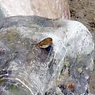 Rocking Robin ,,,,,,,,,,, by lynn carter