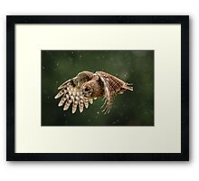 Young Tawny Owl in Flight Framed Print