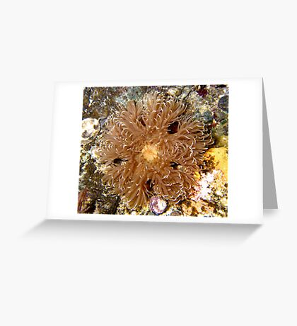 Puget Sound Anemone Greeting Card