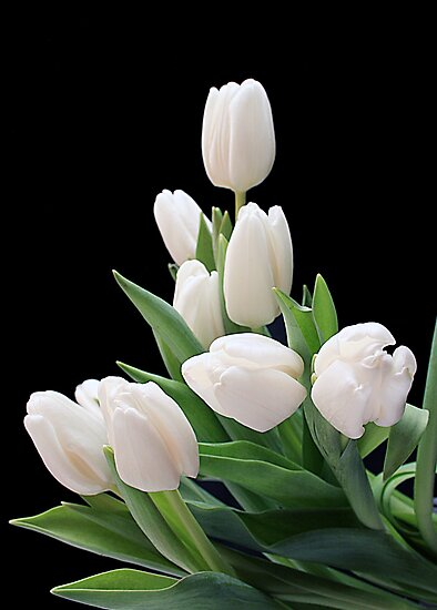 White Tulips by Holly Cawfield