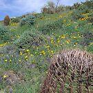 arizona spring by AAndersen