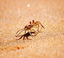 BRAVE HEART - as tiny as a thumbnail! - *MOZAMBIQUE* by Magriet Meintjes