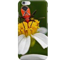 Boxelder Bug (Boisea Trivittatus) iPhone Case/Skin