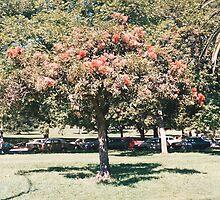 botanic Gardens Melbourne by Roy Hirsch