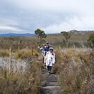 on top of Mt Roland, near Sheffield, Tasmania by gaylene