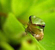 froggy friend by Belinda Cottee