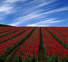 Red Carpet by Jenni77