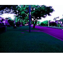 Follow the purple cemented road. Photographic Print
