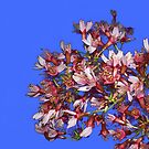 Spring flowers by 4Flexiway