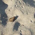 sand1 by wespenspinne