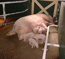 Mrs Piggy by grazelda