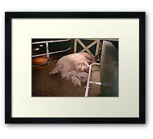 Mrs Piggy Framed Print