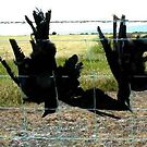 47 - DEAD CROWS NEAR BOWNESS-ON-SOLWAY - 02 - 2004) by BLYTHPHOTO