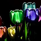 Colors of Light by Jamie Lee