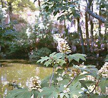 Oak Leaf Hydrangea by Cougarheart