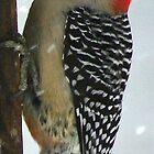Woodpecker in Winter by Sheri Ann Richerson
