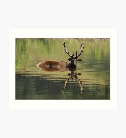 Elk Bath Art Print