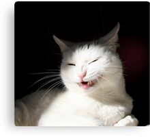 The Cat who smiled Canvas Print