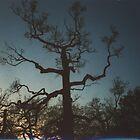 Creepy Tree by malki21