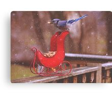 Winter Blue Jay #1 Canvas Print