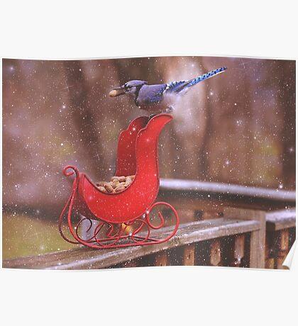 Winter Blue Jay #1 Poster