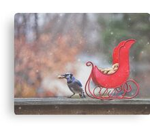 Winter Blue Jay #2 Canvas Print