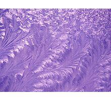 Purple Feathers Photographic Print