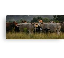 Freaky Cow  Canvas Print