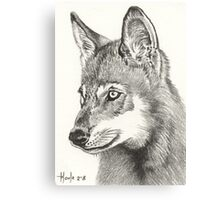 Young Pup - Timber Wolf Canvas Print