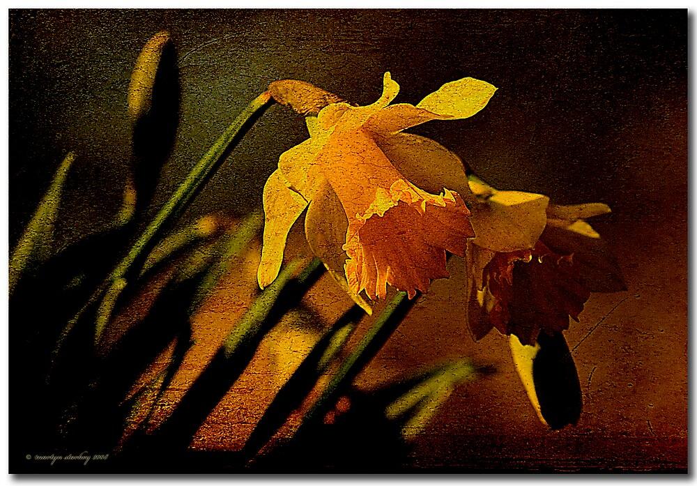 Narcisus by Martyn Starkey