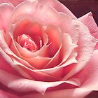 A Charming Rose by Corinne Noon