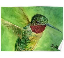 Emeralds and Rubies - Ruby Throated Hummingbird Poster