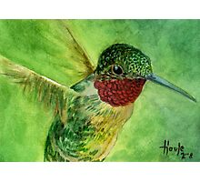 Emeralds and Rubies - Ruby Throated Hummingbird Photographic Print